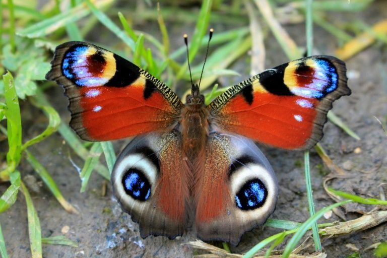 Butterflies gotta chill! Study shows colourful creature impacted by 'warming world'