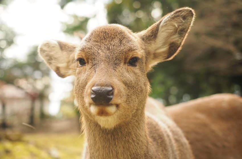 'Deer friendly' bags all-rage in Japanese city to save their doe-eyed from toxic plastics