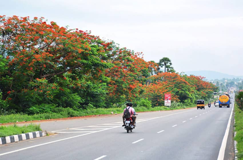 Greener, medicinal roads roll out in north India
