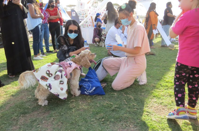 Purrs and Grr's! Scenes from the Dubai Pet Festival 2020