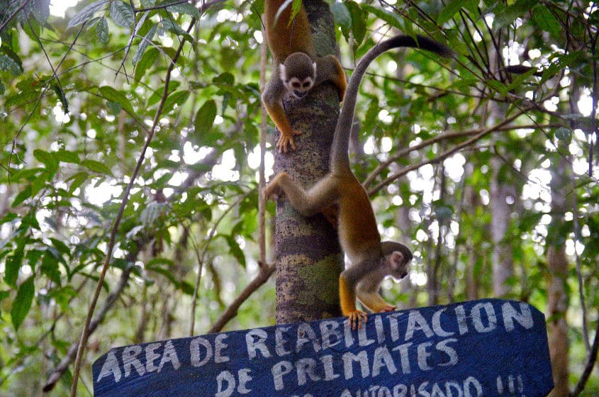 Colombian sanctuary offers refuge to scared, orphaned woolly monkeys