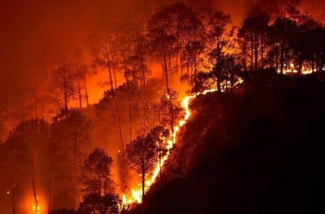 Odisha Fire-Similipal fire- tiger reserve fire- Nilgiri fire-Forest Fire