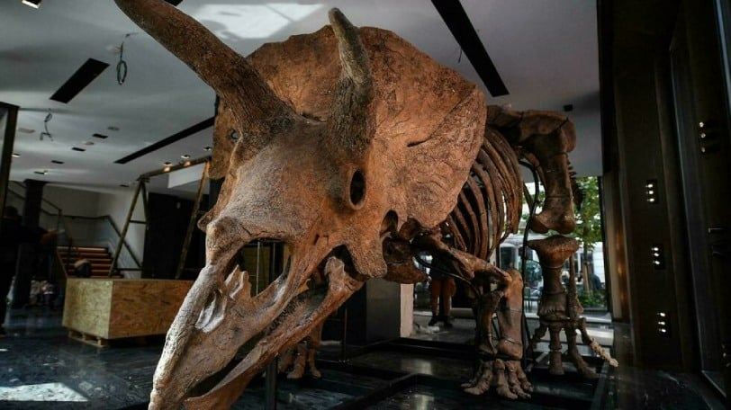 The world's largest dinosaur skeleton could be yours!