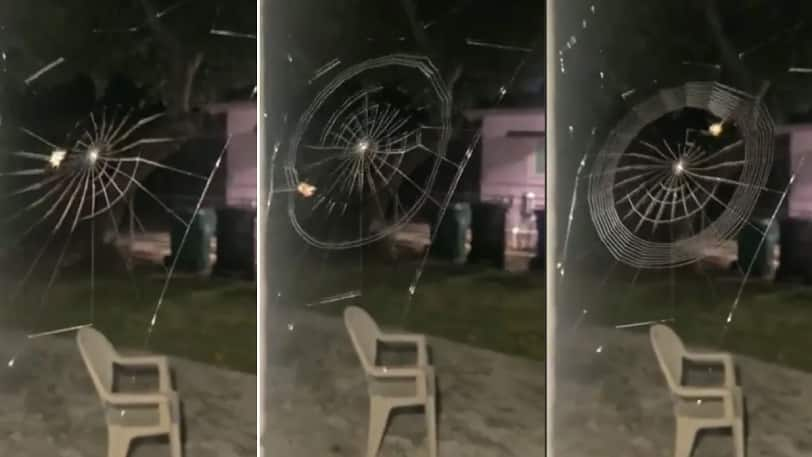 Creating a web of its own!