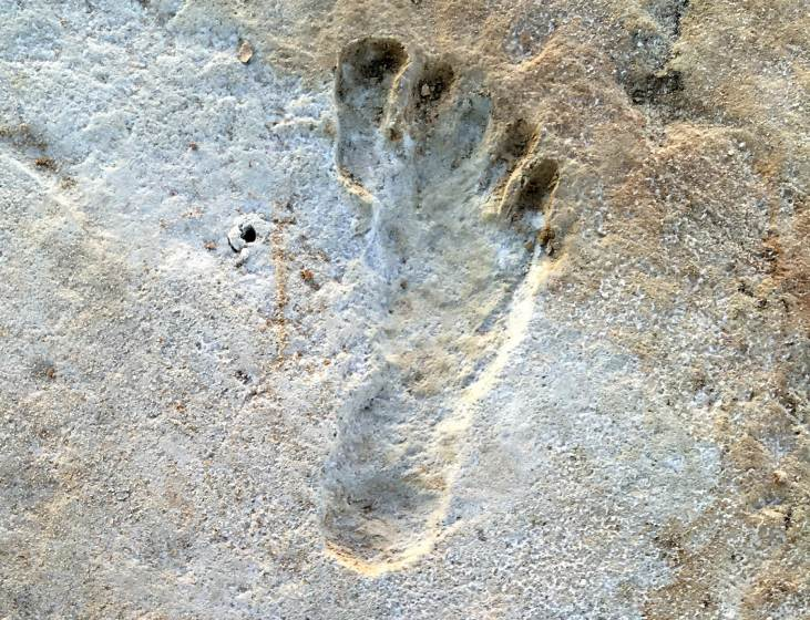 New evidence suggests humans have been walking for over 2000 decades!